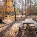 This campground is one of the more remote and peaceful campgrounds in Louisiana. - Kisatchie Bayou Campground