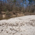 Sandy beach near campsite 1 offers a nice area to sit and enjoy the bayou. - Kisatchie Bayou Campground