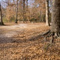 Kisatchie Bayou Campground. - Kisatchie Bayou Campground