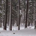 The rest of the campground is closed in the winter.- Link Creek Winter Yurt