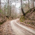 The road coming in heads up a deep ravine and is fun to drive on, but four-wheel drive is recommended. - Tunica Hills Wildlife Management Area Hiking Trails