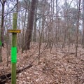 It's really hard to miss the bright-green blazes! - Tunica Hills Wildlife Management Area Hiking Trails