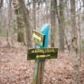 Where Trail B intersects with Nature Trail. - Tunica Hills Wildlife Management Area Hiking Trails