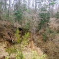 Erosion and deep ravines are common throughout this section of Tunica Hills. - Tunica Hills Wildlife Management Area Hiking Trails