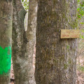 Tunica Hills Wildlife Management Area Hiking Trails.- Tunica Hills Wildlife Management Area Hiking Trails