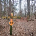 Trail C is a 3.6-mile loop that is arguably the most exciting of the four trails.- Tunica Hills Wildlife Management Area Hiking Trails