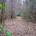 Wondering down Trail C. - Tunica Hills Wildlife Management Area Hiking Trails