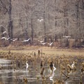 Visit Catahoula in the winter for the best chance at birdwatching! - Catahoula National Wildlife Refuge