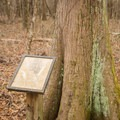 Informative signs can be found along the short hiking trail off of wildlife drive. - Catahoula National Wildlife Refuge