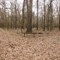 A bench offers hikers a place to rest where the trail loop splits off in either direction. - Catahoula National Wildlife Refuge