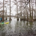 The cypress trees line most of the eastern shore of the state park. - Lake Bruin Water Trail