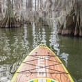 Spanish moss adorns the trees along this route.- Lake Bruin Water Trail