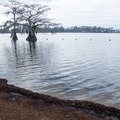 A roped-off beach area makes for a safer swimming environment in the lake. - Lake Bruin State Park