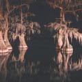 Cypress tree reflections at night. - Lake Bruin State Park