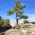 Hearty vegetation thriving amidst the granite formations.- Big Bald Rock