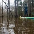Quietly drifting through Saline Bayou.- Saline Bayou