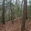 Saline Bayou Hiking Trail.- Saline Bayou