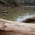 Log jams may impede progress, especially at lower flows.- Bayou Jean de Jean