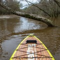 Wood can be a hazard at any flows, but especially higher flows.- Whiskey Chitto Creek