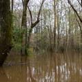 Seasonal floods nurture the forest.- Whiskey Chitto Creek