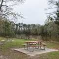 You can put on the water right from the picnic area, or from the nearby boat ramp.- Sam Houston Jones State Park Paddling