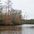 Hints of green in early spring.- Sam Houston Jones State Park Paddling