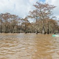High water levels allow for maximum exploration.- Henderson Swamp Paddling