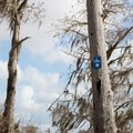 There is a paddle trail, but markers are far apart and hard to spot.- Henderson Swamp Paddling