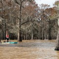 Paddleboard fun in the cypress grove.- Henderson Swamp Paddling
