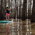 A deep and dark grove.- Henderson Swamp Paddling