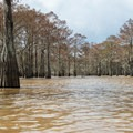 Tree density ranges from wide open to very tight.- Henderson Swamp Paddling