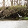 Birds are abundant along the paddle trails.- Franklin + Bayou Teche Paddle Trails