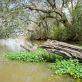 Typical scenery along the canals.- Franklin + Bayou Teche Paddle Trails