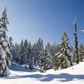 The Black Mountain Trail is in a pristine winter setting.- Black Mountain