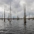 Black Bayou Lake.- Black Bayou Lake Canoe Trail