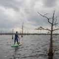Paddling out onto Black Bayou Lake.- Black Bayou Lake Canoe Trail