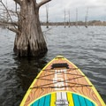 Thousands of trees in the flooded forest.- Black Bayou Lake Canoe Trail