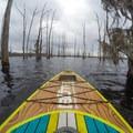 Navigating the skeleton trees.- Black Bayou Lake Canoe Trail