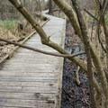 A boardwalk on the trail near the lake.- Black Bayou Lake Canoe Trail