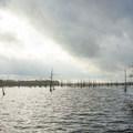 Cloudy but calm day on the water.- Black Bayou Lake Canoe Trail