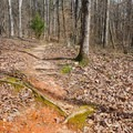Section of trail over roots and red clay.- Lincoln Parish Park