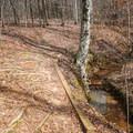 Bumpy part alongside the creek.- Lincoln Parish Park