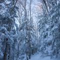 Starr King Trail.- Mount Starr King + Mount Waumbek Snowshoe