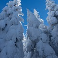Nearing the summit of Mount Starr King.- Mount Starr King + Mount Waumbek Snowshoe