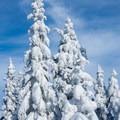 Snowy trees along the trail.- Mount Starr King + Mount Waumbek Snowshoe