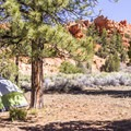 Campsites are great for both tents and RVs.- Red Canyon Campground