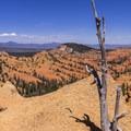Dead junipers make an interesting landscape.- Golden Wall Trail Hike