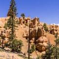 Golden Wall Trail.- Golden Wall Trail Hike