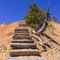 A bit of a climb.- Golden Wall Trail Hike