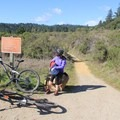 Taking a breather at the Eucalyptus Loop-Enchanted Loop junction.- Wilder Ranch Trails